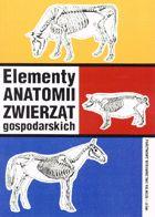 Definicja Elementy anatomii zwierząt słownik